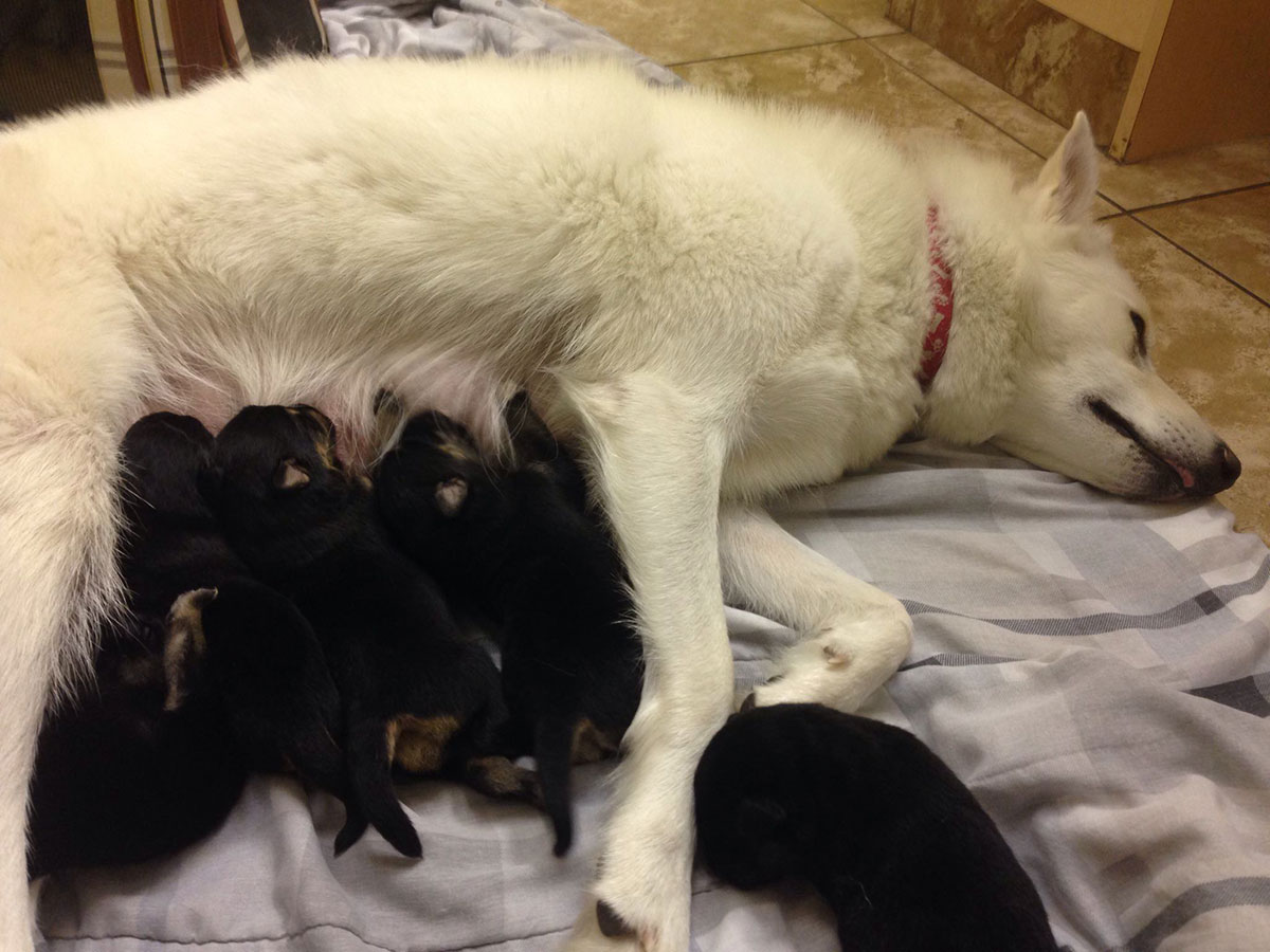 Zona and her puppies